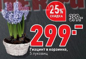 Скидки и акции в О'КЕЙ на цветы