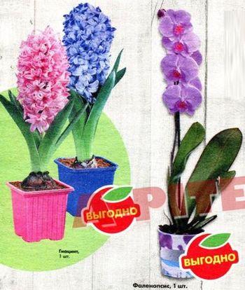 Скидки и акции в Пятерочка на цветы