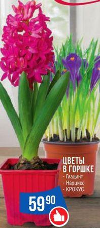 Скидки и акции в 7Я СЕМЬЯ на цветы