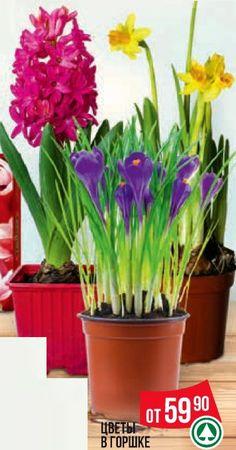 Скидки и акции в Spar на цветы
